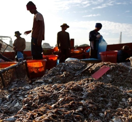 Nestlé has confirmed reports that Thailand's seafood industry is riddled with forced labour and human trafficking. Photograph: Rungroj Yongrit/EPA